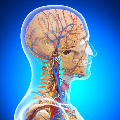 MI_central_nervous_system_14926390_s