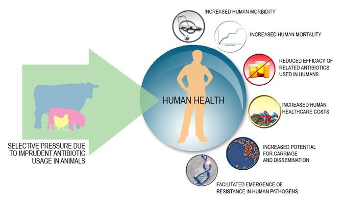 HUMAN-HEALTH-IMPACT_3-copy