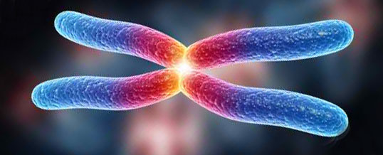 telomere-chromosome