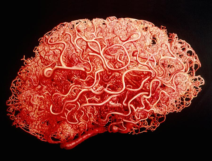 New Research Determines The Brain is Directly Connected to ...